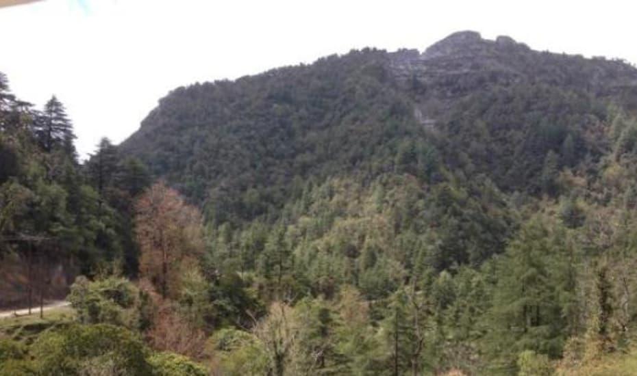 See Green Lodge Dehradun Rooms Rates Photos Reviews